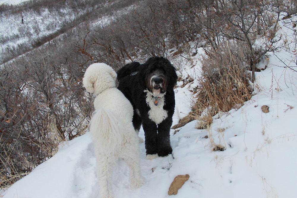 Dog Boarding Park City Utah
